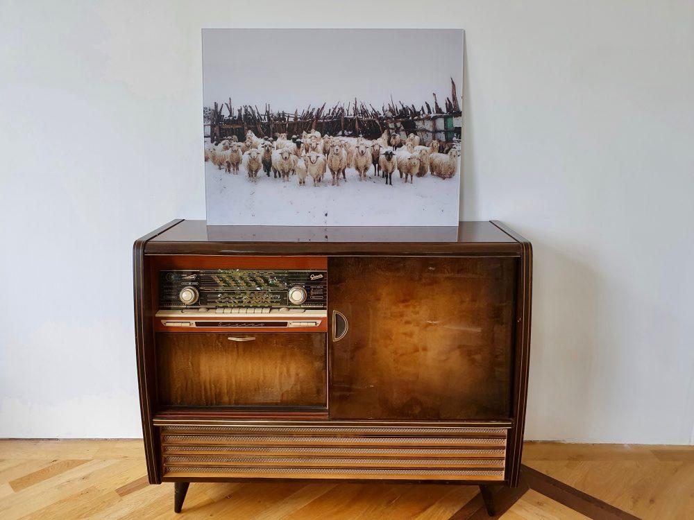 Snowy Sheep Stare von Kevin Russ