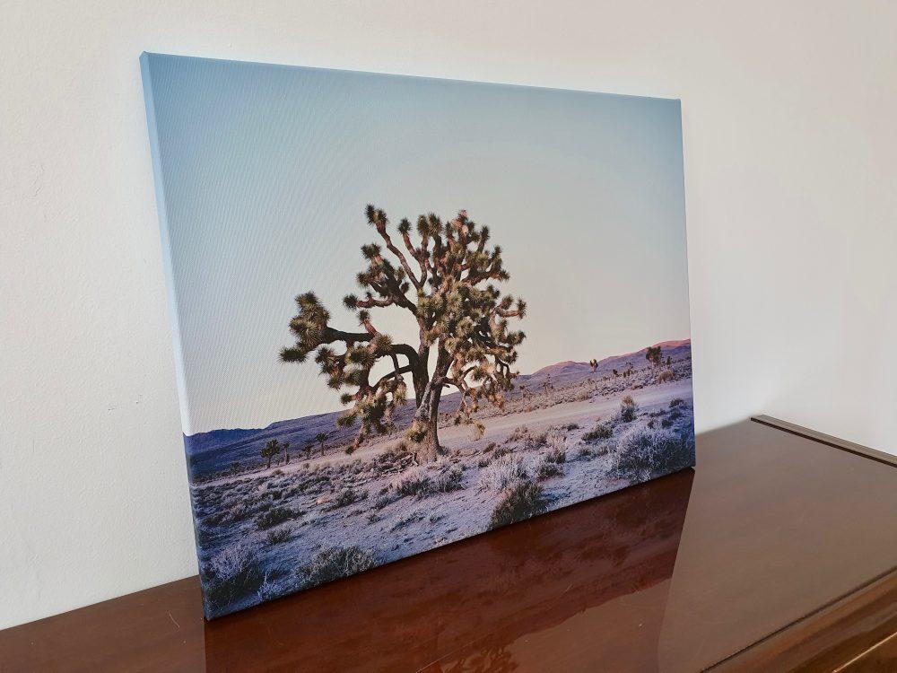 Joshua Tree - Death Valley.* USA von Ronny Ritschel