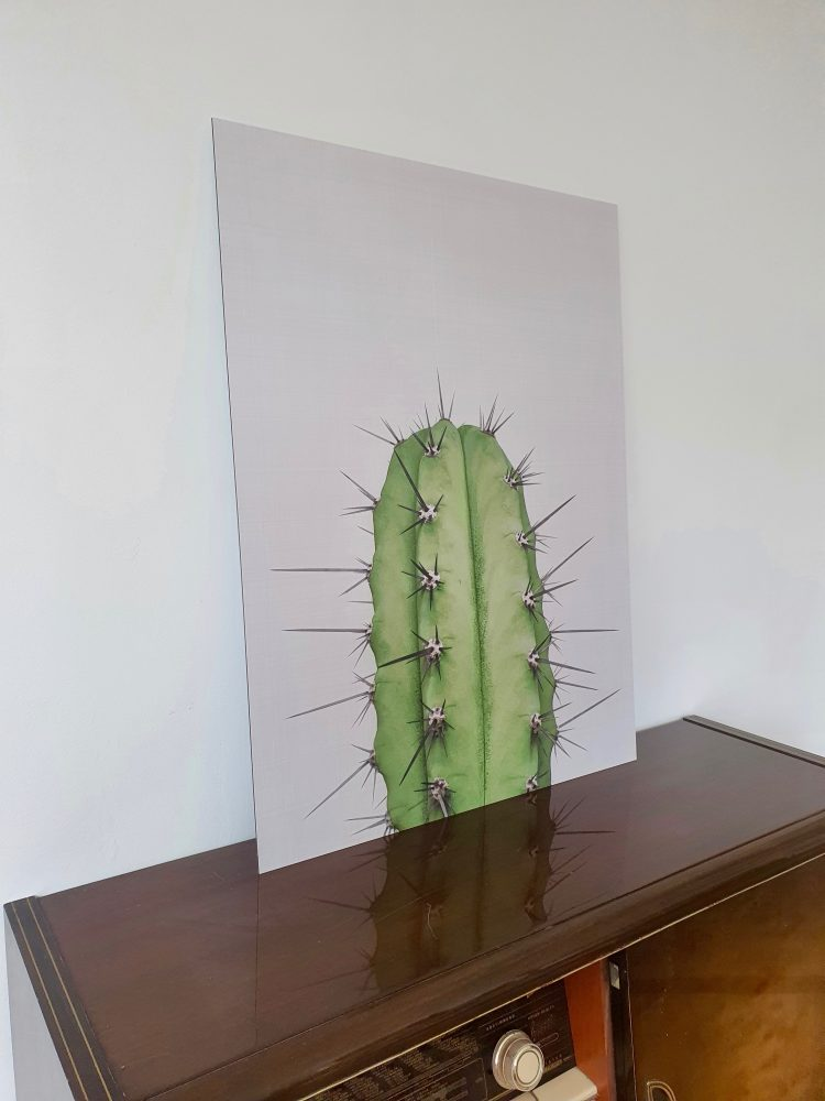 Cactus 2 von Vivid Atelier