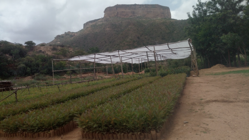 Seedling production and afforestation in Ethiopia