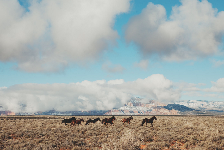 Navajo Horses by Kevin Russ