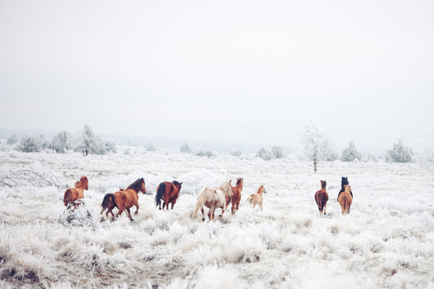 Winter Horseland by Kevin Russ