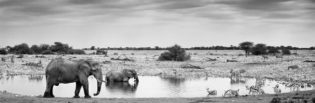 'Okaukoejo waterhole' von Franzel Drepper