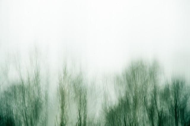 Baumkronen von Gregor Ingenhoven
