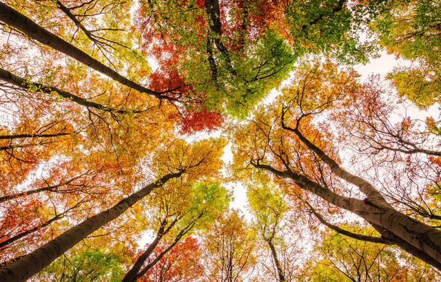 Die Farben des Herbstes von Heiko Gerlicher