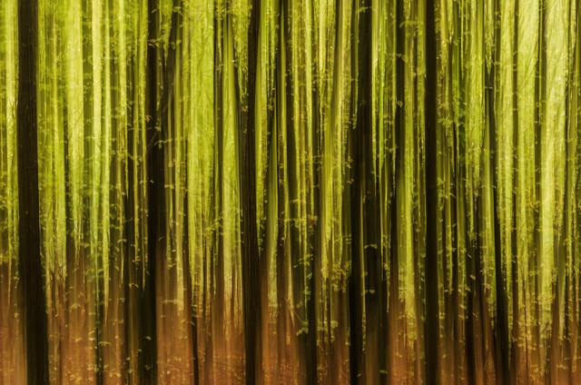 Waldgeheimnisse von Heiko Gerlicher