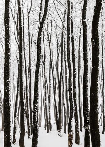 monochrome Eiszeit II von Heiko Gerlicher