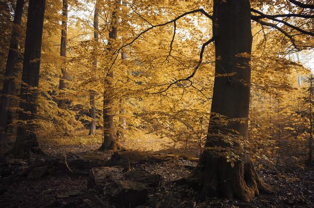 Im Zauberwald #3 von Heiko Gerlicher