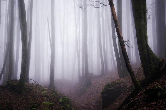 Im Geisterwald #2 von Heiko Gerlicher