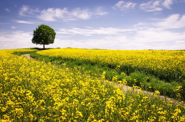 The Joys Of Spring von Heiko Gerlicher