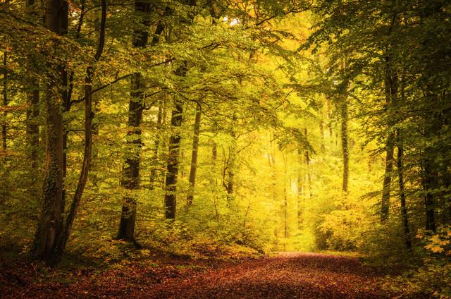 Herbstmomente von Heiko Gerlicher