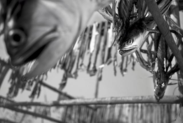 Dry fish, Bangladesh von Jakob Berr